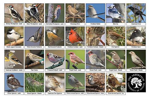 A selection of various birds