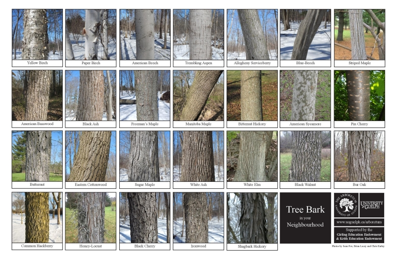 Selection of tree bark