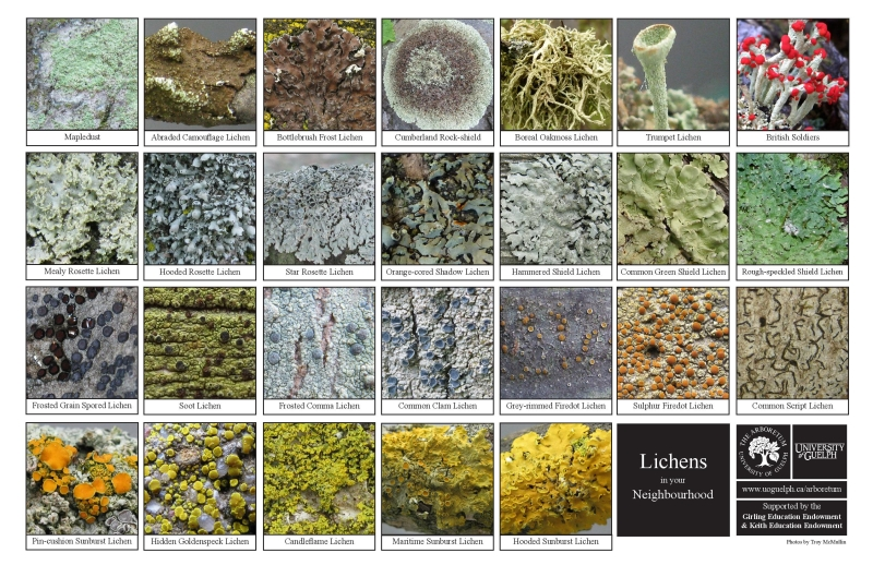 Selection of various lichen