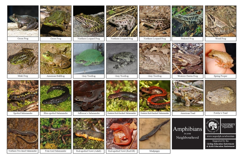 Selection of various amphibians