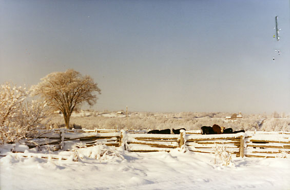 white elm and horses in the snow