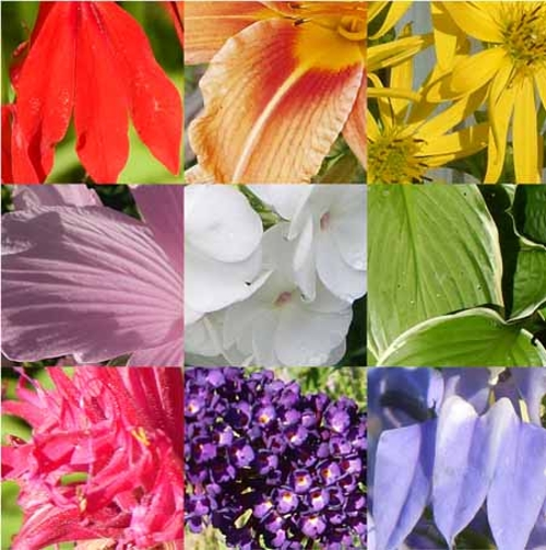flower colours Quiz