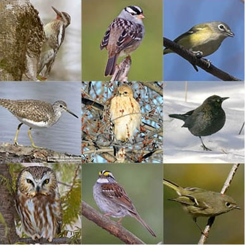 migrant birds Quiz