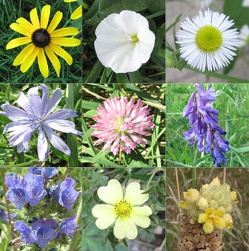 summer flowers Quiz