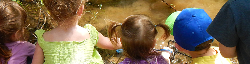 kids watch the underwater life of a stream