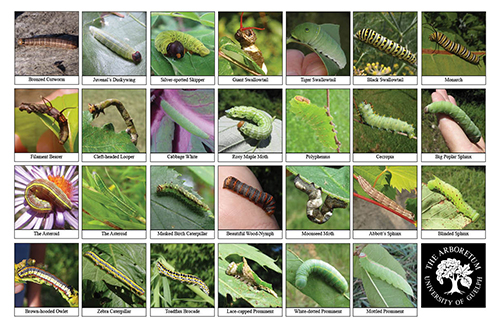 A selection of various caterpillars
