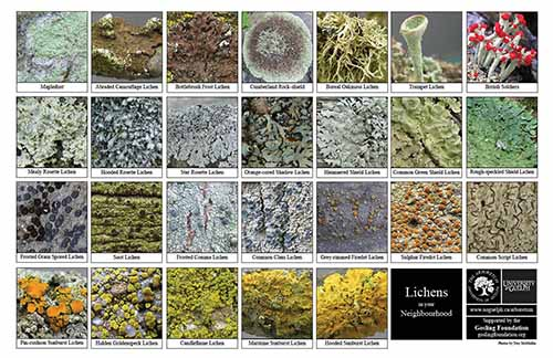 Selection of various fungi and liches