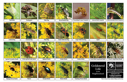 A selection of various insects
