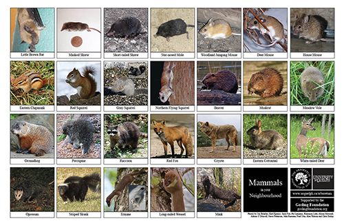 A selection of various mammals