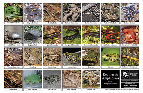 Selection of various reptiles and anphibians