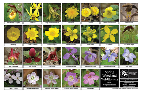 Selection of various wildflowers