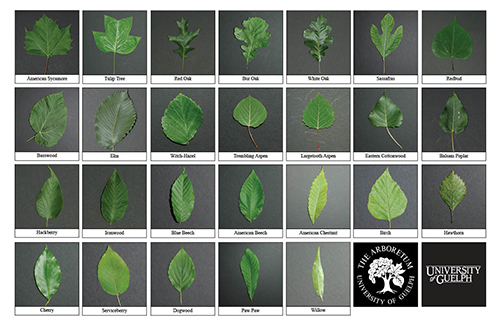 Selection of various tree leaves
