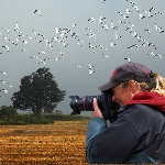 Man taking a photo of birds