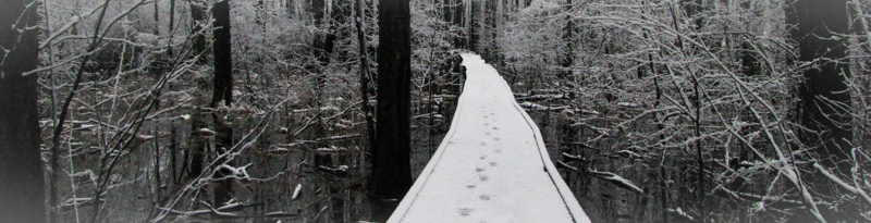 trail through the forest in the winter