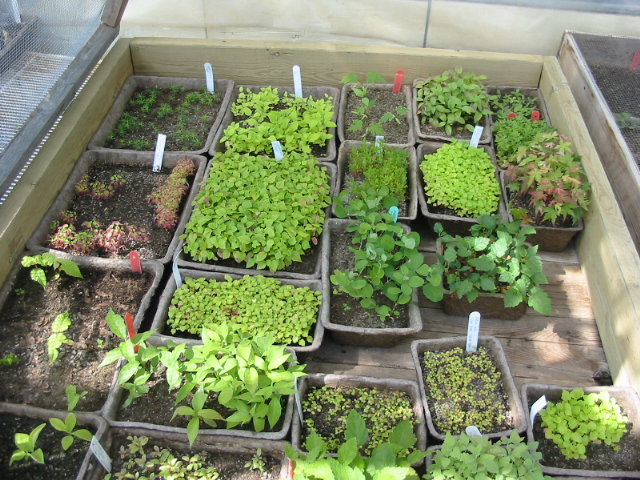 A variety of tree seedlings just after germination.