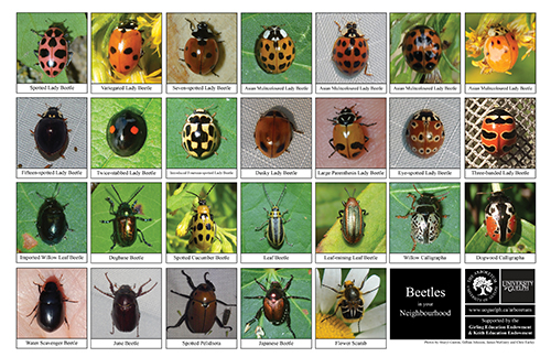 beetle biodiversity sheet - side 1