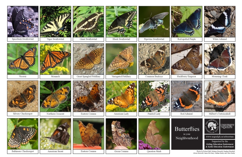 Selection of various butterflies