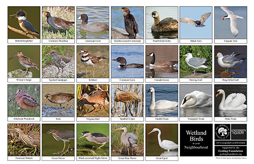 a selection of wetland birds