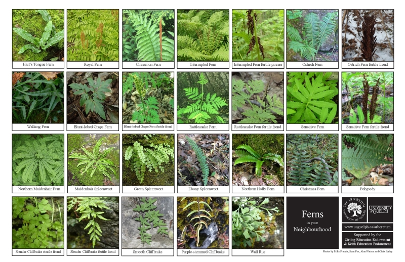 Selection of various ferns