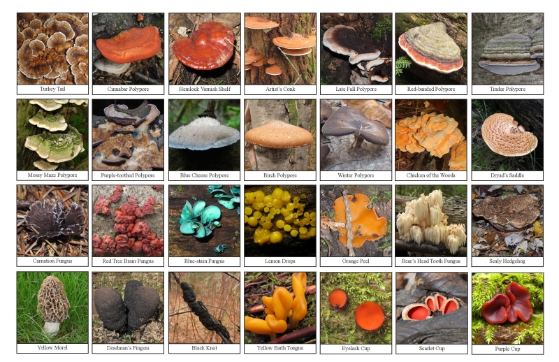 Selection of various fungi