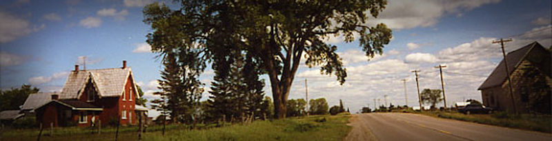 historical slide of white elm next to farm house