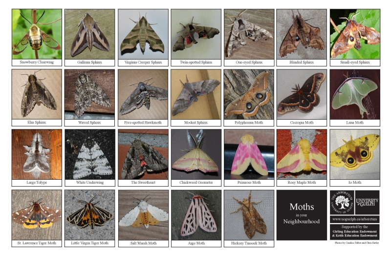 Selection of various moths