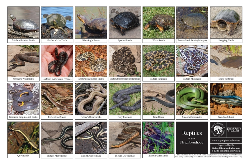 Selection of various reptiles