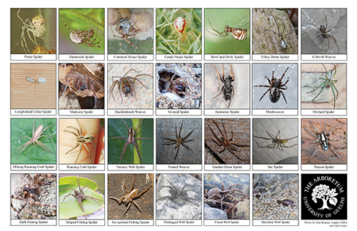 a selection of spiders