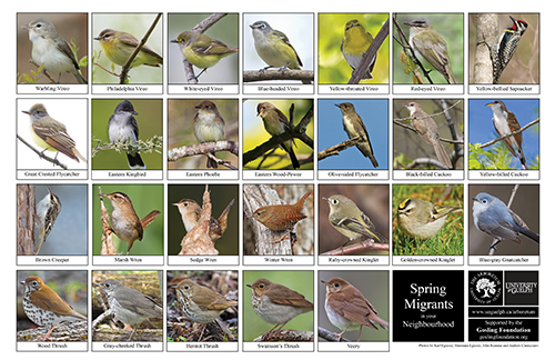 a selection of spring migrants