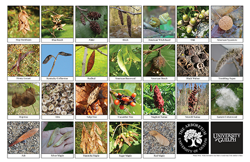 tree fruits and seeds biodiversity sheet - side 1