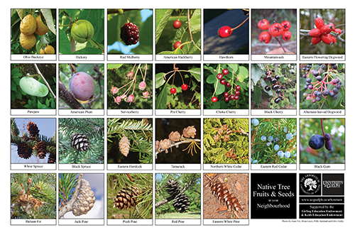 tree fruits and seeds biodiversity sheet - side 2