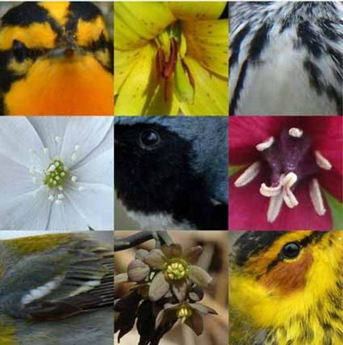 quiz. warblers and wildflowers