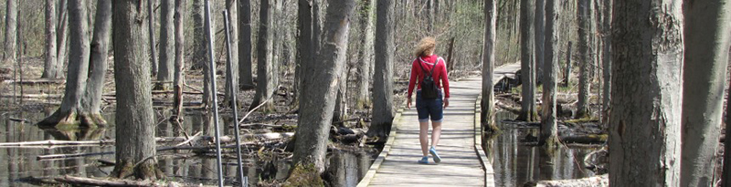 photo of person walking along wild goose woods boardwalk
