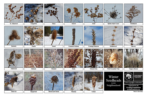 a selection of winter seedheads